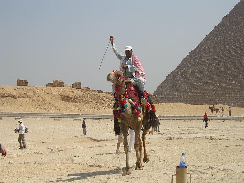piramides de giza camellos