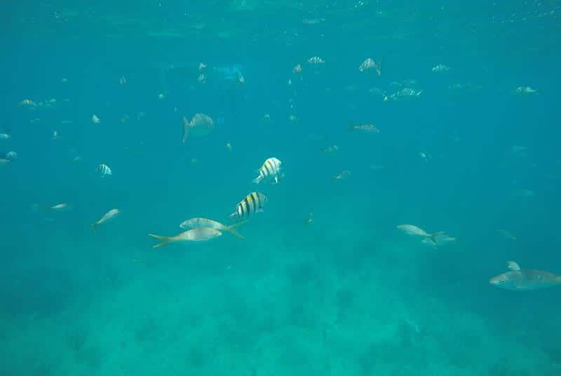 Snorkel en Varadero