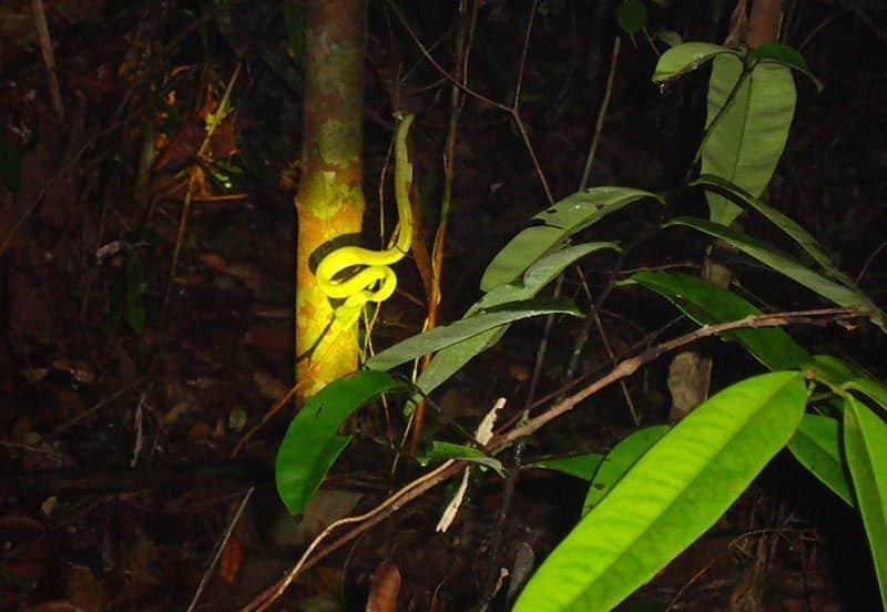 serpiente-en-indonesia