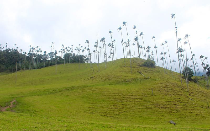 Valle del Cocora Salento Colombia
