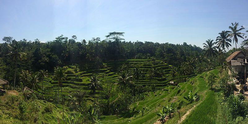 Terrazas de Tegallangang Bali