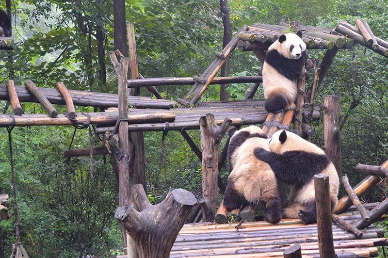 Centro de conservación de osos panda