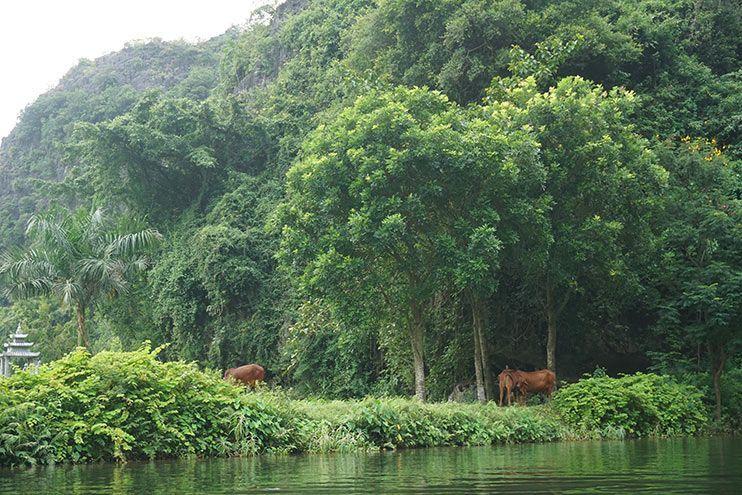Las tres cuevas Ninh Binh