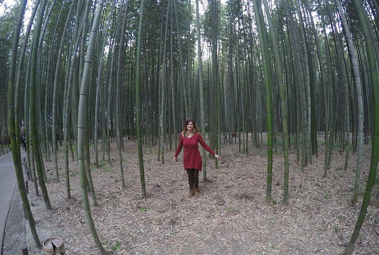 Bosque de Bambu Arashiyama Kioto