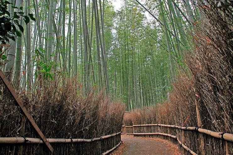 Kioto III:  Oeste de Kioto, qué ver en Arashiyama y cómo visitar el bosque de bambú