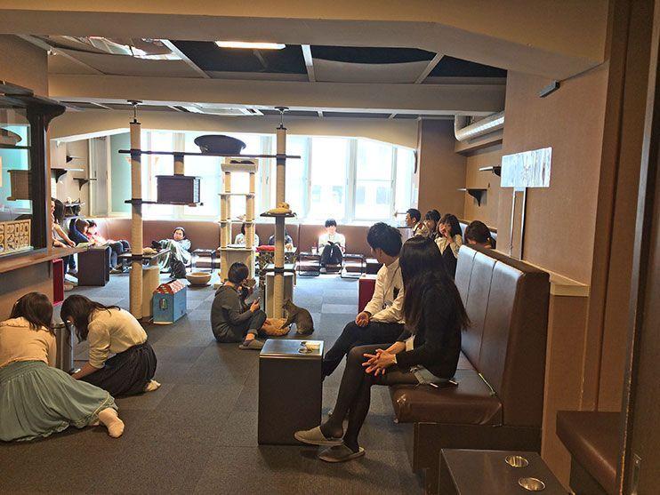 Neko café Tokio que hacer en shinjuku