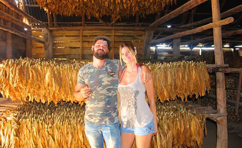 Plantaciones de tabaco en viñales