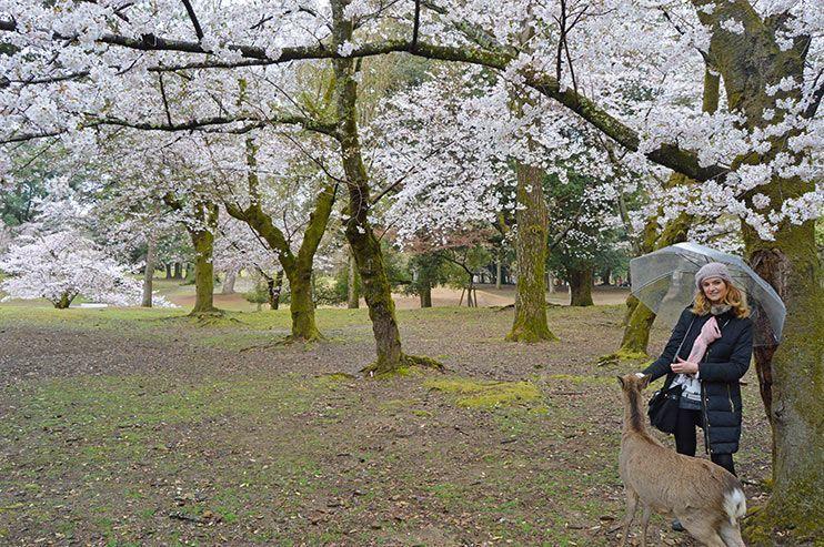 7 lugares imprescindibles que ver en Nara, la ciudad de los ciervos de Japón 🦌