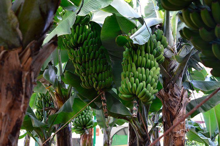 Casa del Plátano