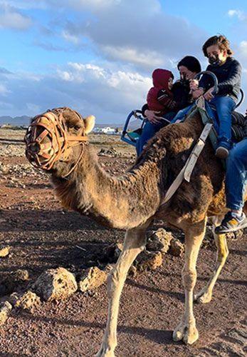 montar camello fuerteventura